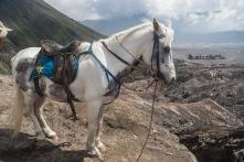 Volcano Horse